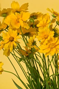 Free Yellow Flowers Stock Photos - 6768083