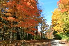 Free Trail In Autumn Forest Royalty Free Stock Photos - 6768118