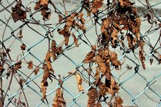 Free Leaves On Fence Stock Image - 6768121