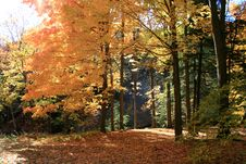 Free Autumn Forest Stock Photos - 6768133