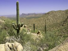 Free Saguaro Valley Stock Images - 6768474
