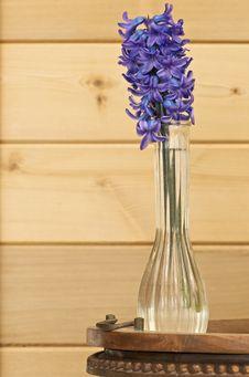 Free Hyacinth Stock Images - 6768514