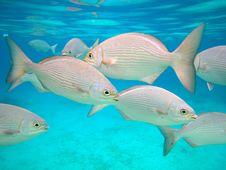 Free Fishes In Chankanaab Royalty Free Stock Photography - 6769197