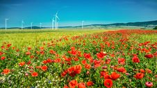 Windmills In The Poppy Field Royalty Free Stock Photo