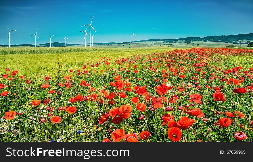Windmills in the poppy field
