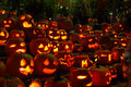 Free Carved Lighted Pumpkins Royalty Free Stock Images - 6779429