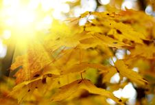 Free Yellow Autumn Leaves Stock Image - 6771191