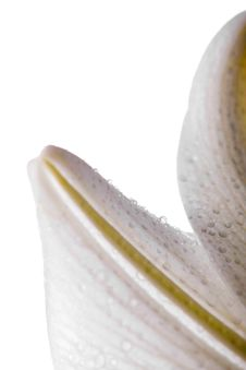 Free Lilly  Flower Closeup Royalty Free Stock Photos - 6771908