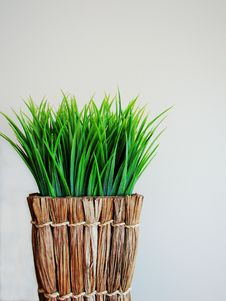 Free Grassy Indoor Plant Stock Photography - 6771982
