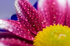 Free Macro Of Daisy Petals Stock Images - 6772124
