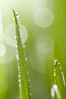 Free Macro Of Wet Grass Stock Image - 6772131