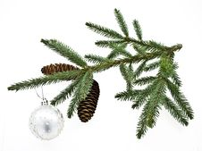 Fir Tree Branch With Cones. Royalty Free Stock Photography
