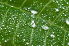 Free Macro Of Wet Leaf Royalty Free Stock Photography - 6772307