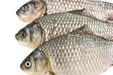Free Three Carps Stock Photo - 6772870