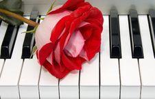 Free Piano Stock Image - 6772941