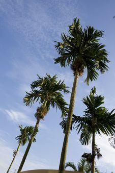 Free Palm Tree Stock Photography - 6773032