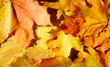 Free Background From Autumn Leaves Stock Photo - 6773670
