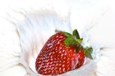 Free Milk Strawberry Splash Side Royalty Free Stock Photography - 6774267