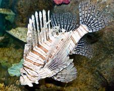 Free Dragon Fish In The Aquarium Royalty Free Stock Photo - 6775015