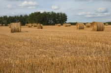 Free Hay Bales Royalty Free Stock Photography - 6775387
