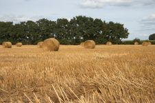 Free Hay Bales Royalty Free Stock Photography - 6775397