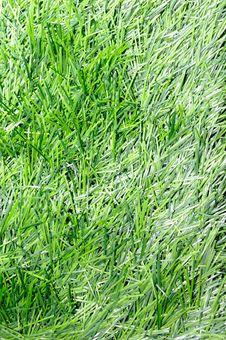 Free Turf Royalty Free Stock Image - 6775756