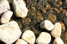 Free Stones On The Rock Marine Background Royalty Free Stock Photo - 6776075