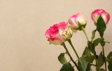 Free Bouquet Of Roses Stock Photography - 6776162