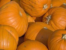 Free Harvested Pumpkins Royalty Free Stock Photo - 6777675