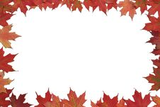 Free Red Maple Leaf Poster Or Card. Stock Images - 6778194