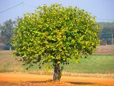 Free Tree In Autumn Royalty Free Stock Photo - 6778365