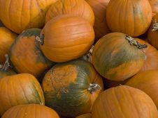 Free Harvested Pumpkins Royalty Free Stock Photos - 6778578
