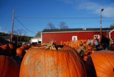 Free Pumpkins For Sale Stock Photo - 6778740