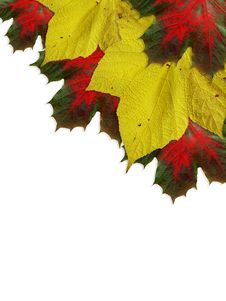 Free Autumn Leaves Royalty Free Stock Photos - 6778808