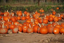 Free Pumpkins For Sale Stock Photos - 6778813