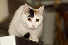 Free Cat On The Refrigerator. Stock Photography - 6779052