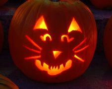 Carved Lighted Cat Pumpkin Royalty Free Stock Photography