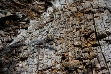 Free Bark Texture Stock Photos - 6779793