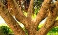 Free Tree Stock Photography - 6781462