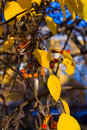 Free Beautiful Autum Leaves And Berry Stock Image - 6786321