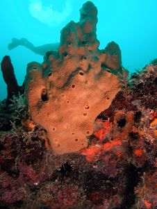 Brown Sponge Royalty Free Stock Photo