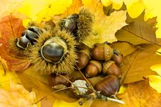 Free Autumnal Decoration With Leafs,chestnuts And Acorn Stock Photos - 6780303