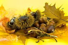 Free Autumnal Decoration With Leafs,chestnuts And Acorn Royalty Free Stock Photography - 6780337