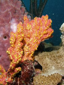 Free Coral Reef Royalty Free Stock Images - 6780339