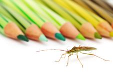 Free Shield Bug And Color Pencil Stock Photos - 6780503