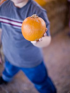 Free Boy Holding Pumpkin Stock Images - 6780804