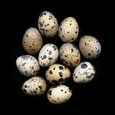 Free Quail Eggs Royalty Free Stock Photo - 6782705