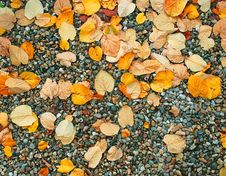 Free Autumn Wet Leaves Background Over Rocks Stock Image - 6783011