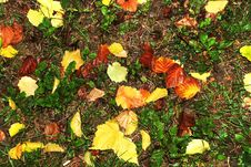 Free Autumn Wet Leaves Background Royalty Free Stock Images - 6783309