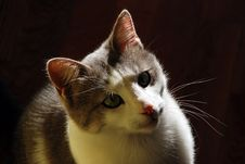 Free Cat Indoor In Back Light Royalty Free Stock Images - 6783829